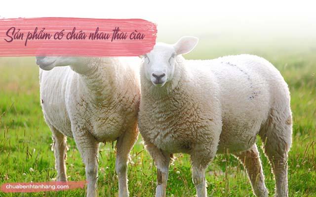 viên uống Sheep Placenta trị tàn nhang chứa nhau thai cừu