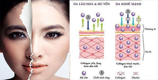 collagen-la-gi-uong-nhieu-collagen-co-tot-khong-1