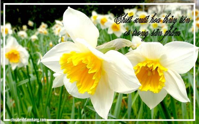 kem trị nám tàn nhang ohui chứa chiết xuất hoa thủy tiên
